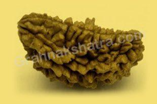 1 mukhi rudraksha image.grahnakshatra